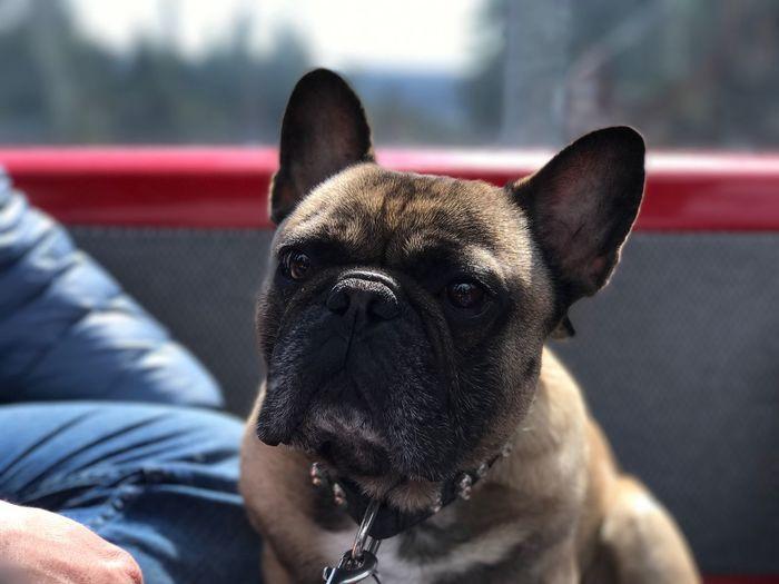 Close-up of curious dog