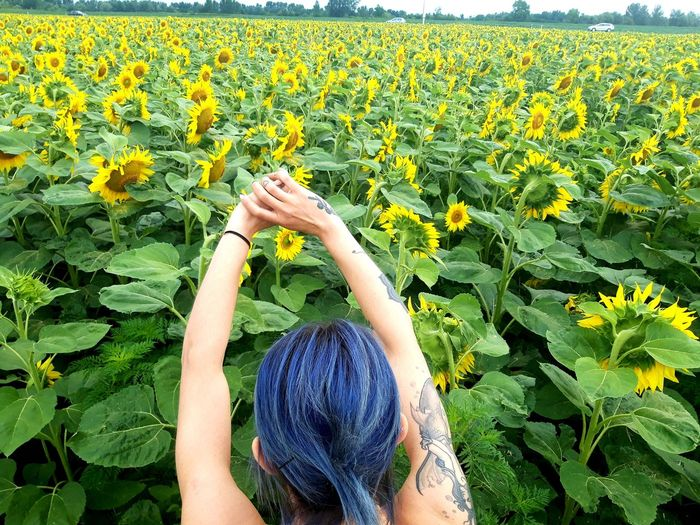 Midsection of woman with yellow flowers in field