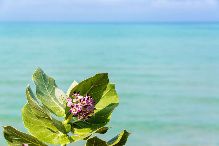 Purple flower with vibrant green leaves and out of focus sea in the background near Palomino, Colombia America Beach Beautiful Caribbean Coast Colombia Day Forest Guajira Idyllic Laguajira Landscape Nature Outdoors Palomino Rock Sand Scenic Sea South Tourism Travel Tree Tropical Water