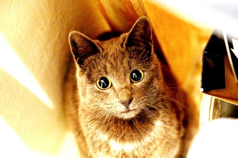 Mycat♥ Benimkedim💞 Kedimiz Animal Worldbestgram World Adana Türkiye The Portraitist - 2016 EyeEm Awards Osmanbalikci Love Animal Lover