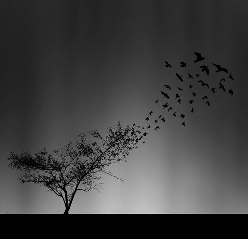 Away Nature Animal Themes Animal Wildlife Animals In The Wild Beauty In Nature Bird Blackandwhite Conceptual Photography  Deforestation Deforestation Effect Flock Of Birds Flying Large Group Of Animals Mid-air Migrating Nature No People Silhouette Sky Togetherness Tree