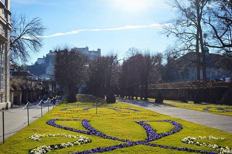 Верьте или нет, но это 27 декабря. Зима в Австрии в этом году такая 🌸 Winter Winterinösterreich Salzburg Ferien Holidays Latergram Travel Travel2austria Mirabell SchlossMirabell Austria Österreich Europe