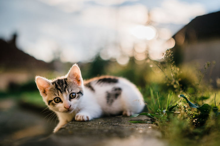 Close-up portrait of kitten sitting on field