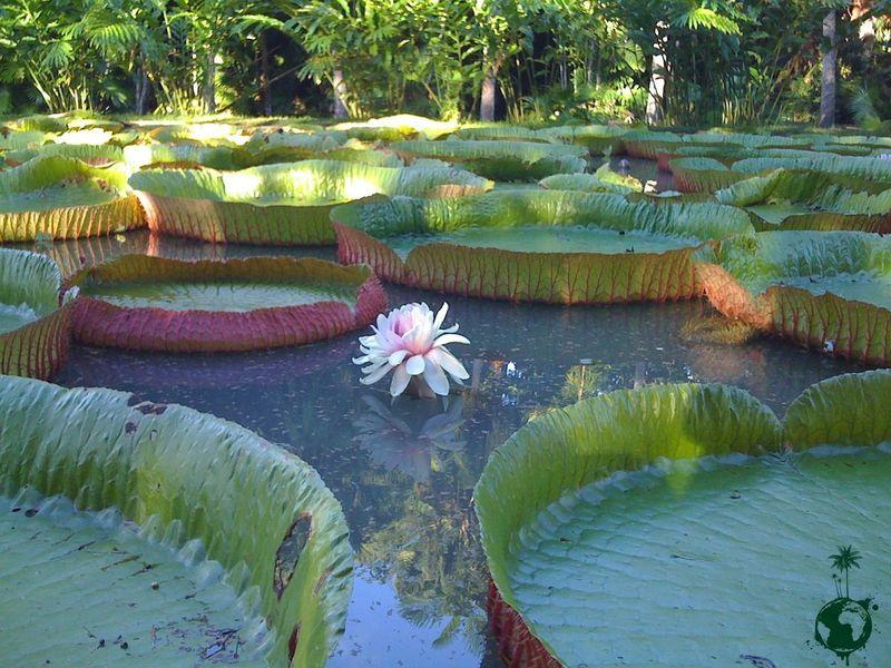 Hello World Mauritius Bizarre Nature Nature Nenuphar