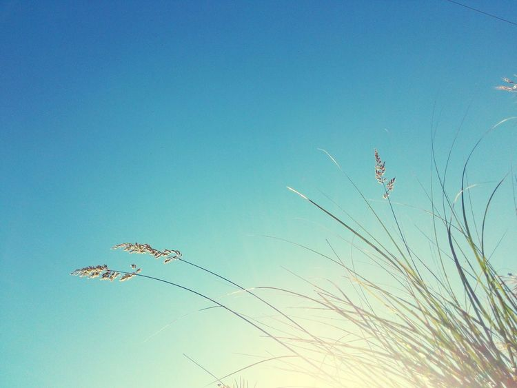 Summertime Summer Vibes Sunshine Photography Art Enjoying Life Love Majesticmoments Relaxing Chill Lounge Chillin' Peaceful Bleu Sky