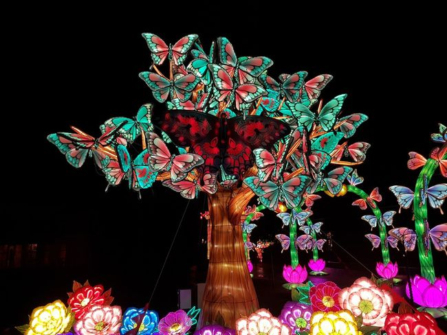 China Light Festival Zoo Antwerpen Taking Photos Butterfly Wish Tree Black Background Illuminated Tree Multi Colored Celebration Motion