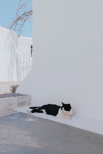 View of a cat chilling in santorini
