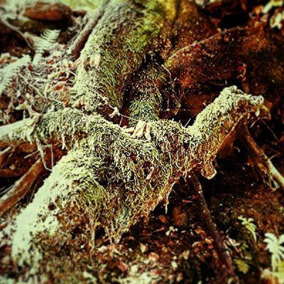 Varese Instavarese Ig_varese Ig_milan radice albero sentiero amatelarchitettura