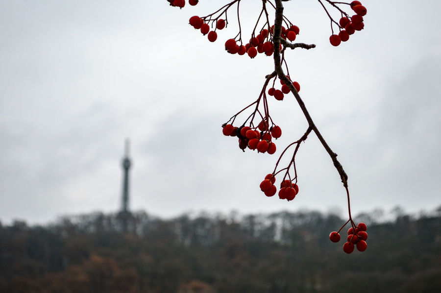 Autumn Beauty In Nature City Close-up Focus On Foreground Freshness Hanging Landscape Minimalism Minimalobsession Nature Outdoors Red Simple Beauty Simplicity Street Taking Photos TheWeekOnEyeEM Tree Walking Around The City  Adapted To The City