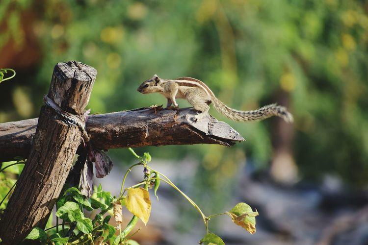 Reptile Leopard