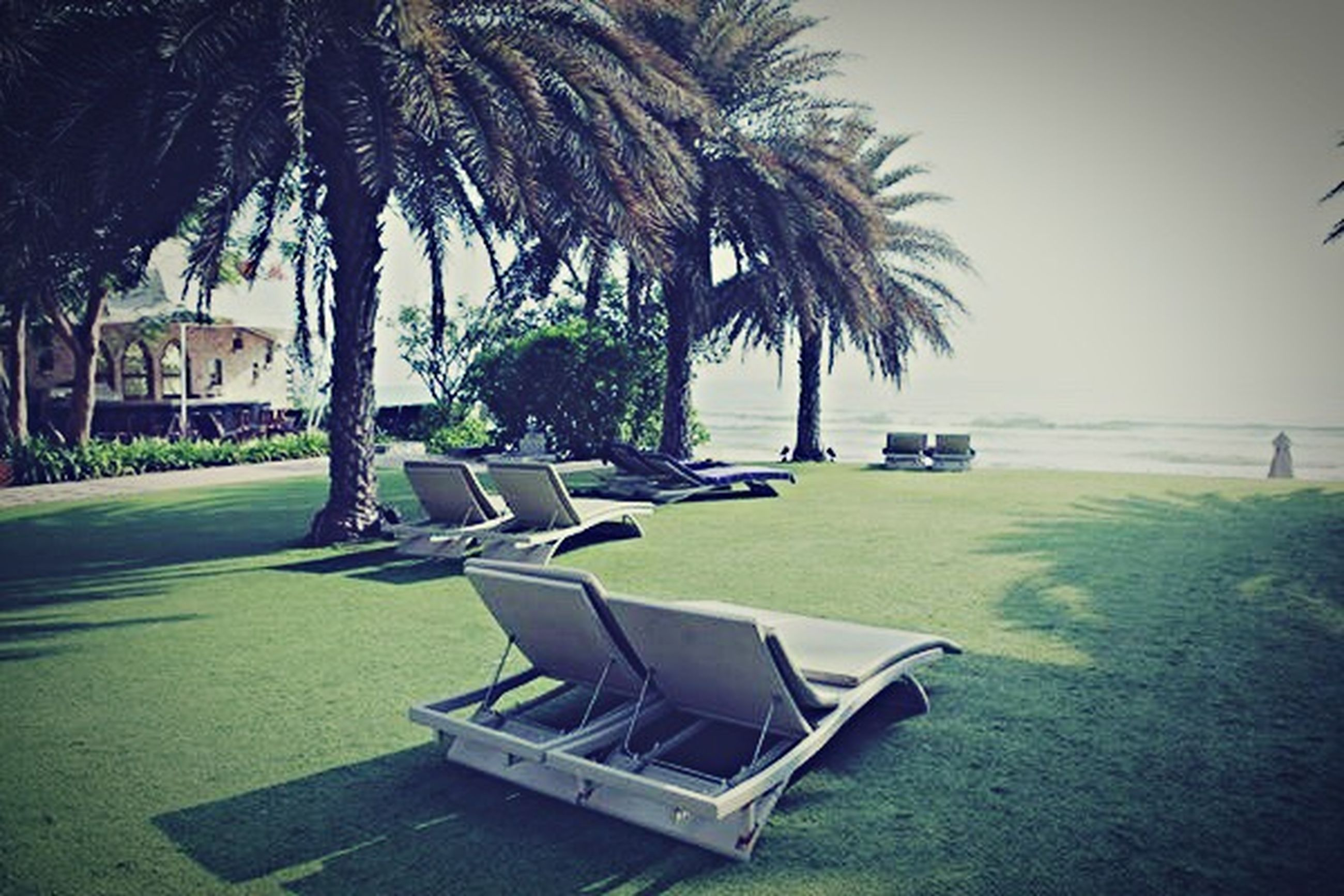 palm tree, tree, wireless technology, laptop, technology, no people, internet, outdoors, nature, day, green - golf course