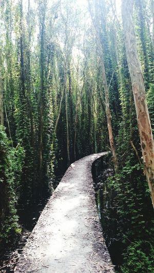 PhonePhotography LongAncity Vietnam Mytrip Trees Natural Breathe