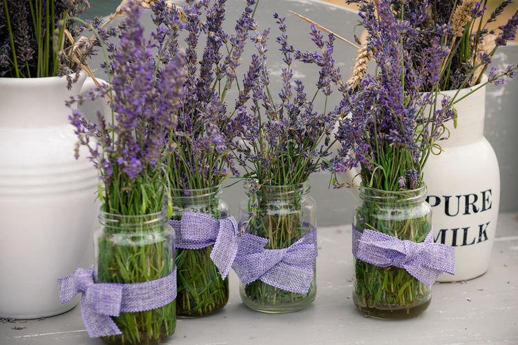 Lavender Day No
