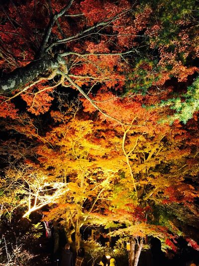Outdoors Tree Nature Autumn Leaf Beauty In Nature Seto Autumn Aichi Fall Japan