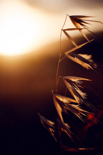 Atmospheric Mood Blade Of Grass Close-up Environmental Conservation Focus On Foreground Glowing Grass Growing Growth Leaf Light Nature No People Outdoors Plant Selective Focus Shiny Stem Twig Macro Beauty Capture Tomorrow