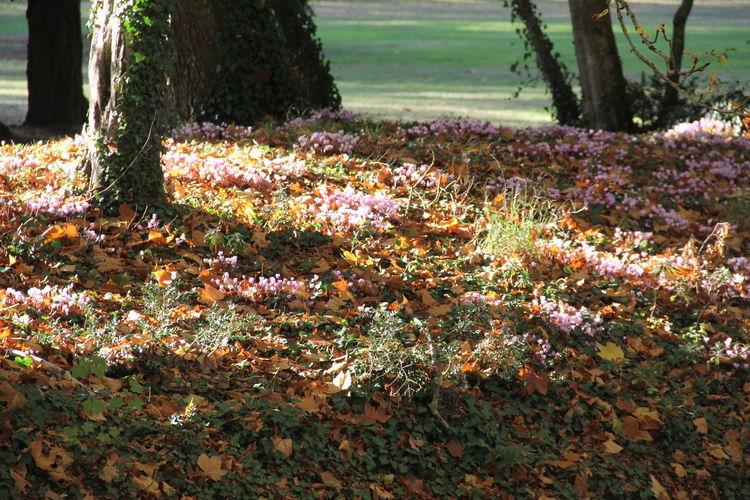 Image of flower trees on landscape