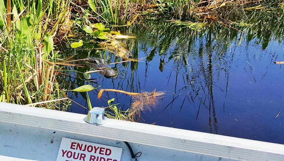 Text Day Communication Outdoors Water No People Plant Nature Close-up Kissimmee Kissimmee, Fl Aligator Aligator Eye Lamp Aligators Swamp Swamp Life Airboat Airboat Ride Airboat Rides On The Swamps