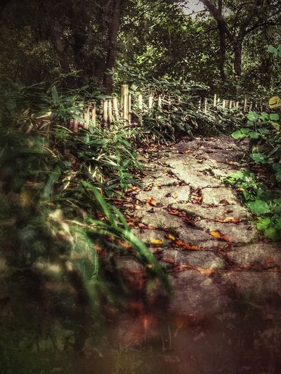 Forest WoodLand Nature Tranquility Moss Wilderness HDR Stone Trail Japanese Style Bambo Fence Mysterious Mystery Dream Scary Darkness