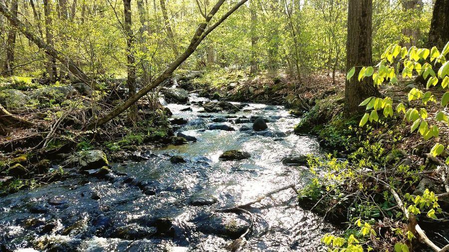 Water Brook