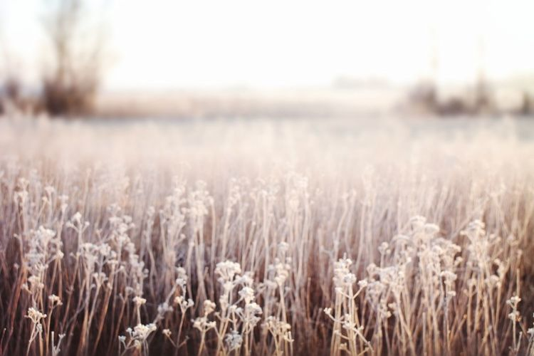 frozen world Frozen Nature Focus On Foreground Beauty In Nature Nature Photography My Point Of View Nature_collection Cold Temperature Frozen Cold Condition Cold Weather Hergershäuser Wiesen Cereal Plant Rural Scene Field Close-up Sky Landscape Tranquil Scene Countryside Scenics Idyllic