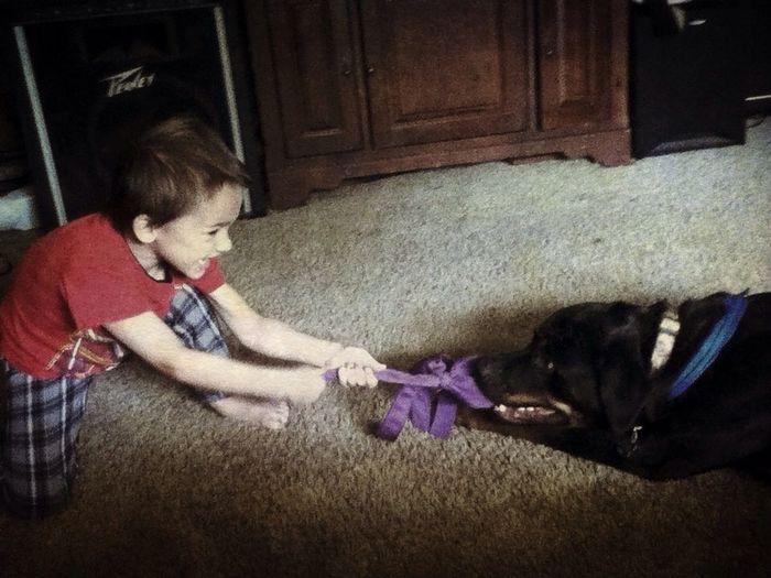 Dog Rottweiler Mansbestfriend Playing With Zuka