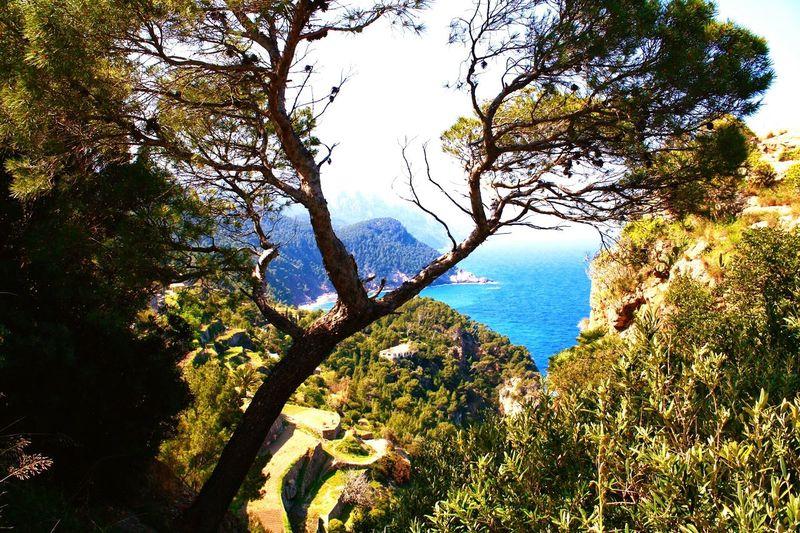 Beautiful Surroundings Still Life Ocean View hill Tee