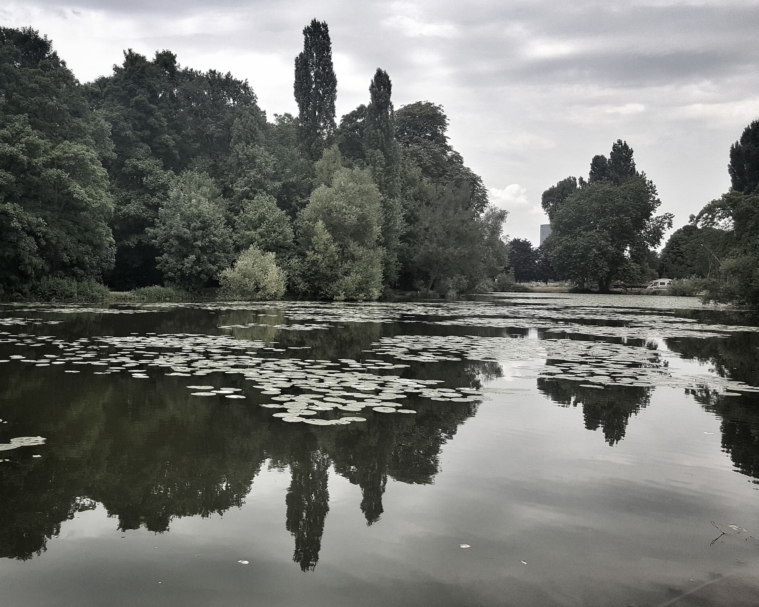 tree, reflection, water, sky, lake, tranquil scene, tranquility, nature, no people, scenics, waterfront, outdoors, beauty in nature, growth, day, cloud - sky