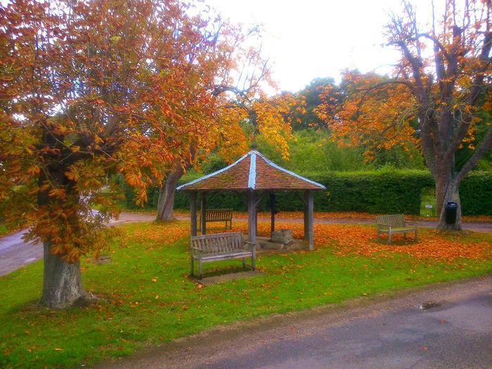 Autumn Colors Bench Art Hello World Seasons Village green Thorpe Abbotts Suffolk....