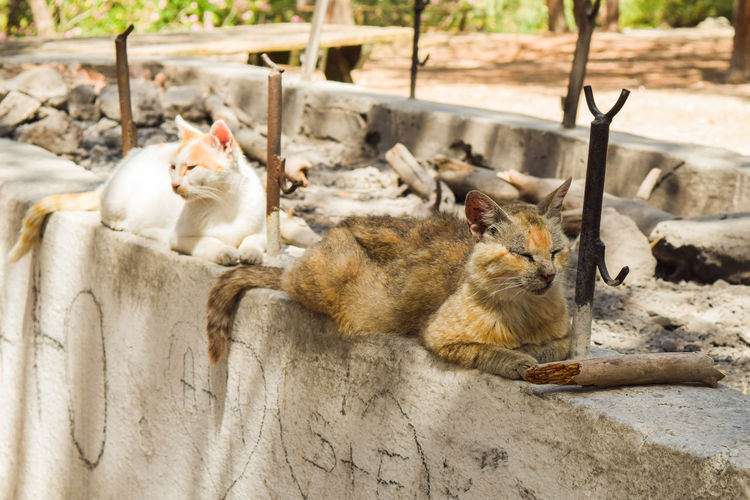 Cats lying on a wall in a mediterranean park Baby Beautiful Funny Housecat Animal Animal Themes Animal Wildlife Animals In The Wild Brown Cat Day Domestic Animals Domestic Cat Feline Gray Kitten Mammal Mammals Nature No People Outdoors Sleeping Cats Tabby Tiger Wildcat