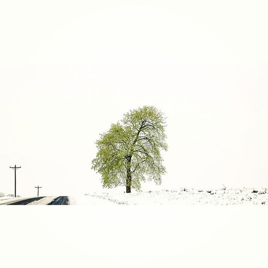 May Snow. Beautiful Picoftheweek Art Missouri instapic instagraphy instadaily instagrammers bokeh picoftheday instagood bestoftheday photooftheday naturelovers igdaily snow springsnow spring christmasinmay snowfall travel winter lonelyroad nofilter amazing scenicview lonelytree sky