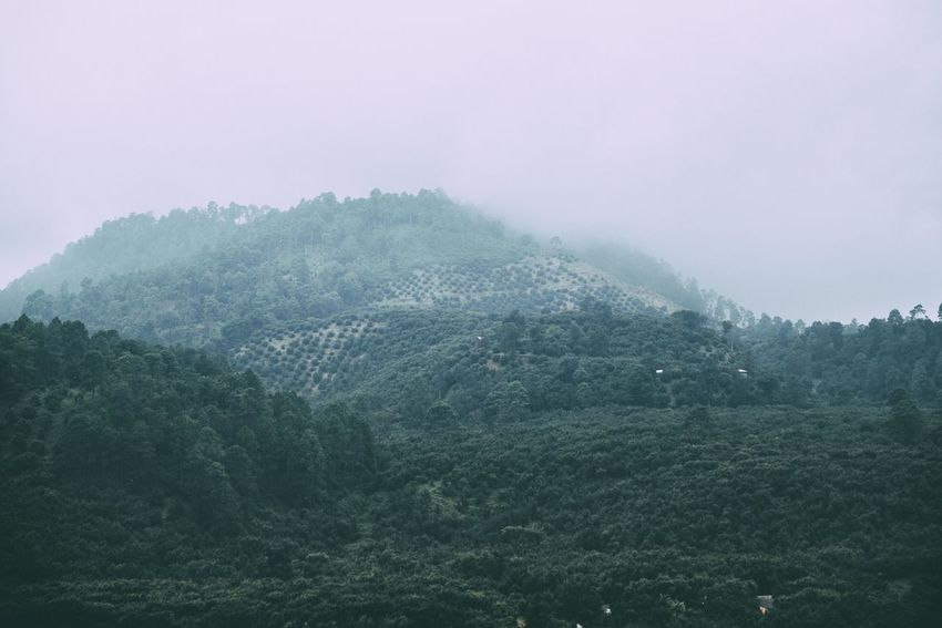 View of a hill covered with haze. Fog Scenics - Nature Tree Mountain Environment Plant Landscape Beauty In Nature Nature Tranquility Forest Tranquil Scene No People Sky Non-urban Scene Land Lush Foliage Foliage Day Outdoors Rainforest