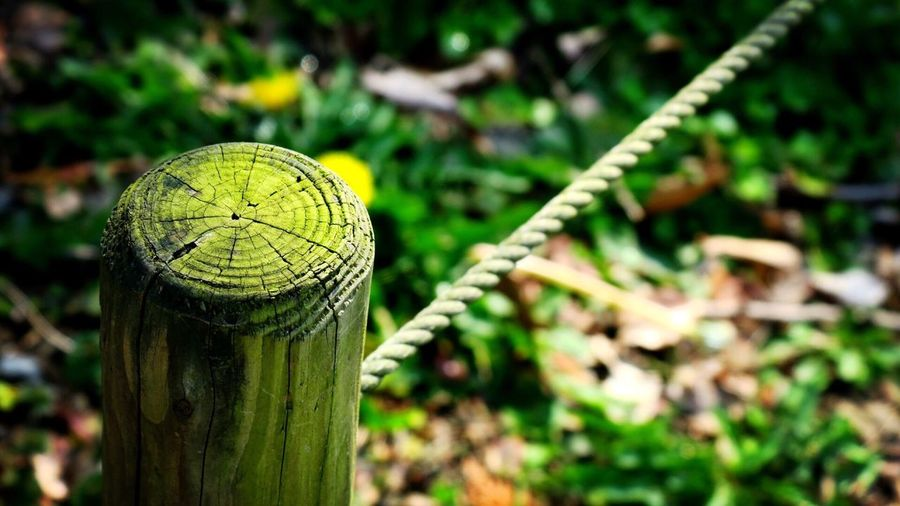 High Angle View Of Moss Covered Wooden Fence On Sunny Day