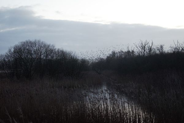 Marshes RSPB Ham Wall Wetland Beauty In Nature Grass Landscape Murmuration Of Starlings Nature No People Outdoors Scenics Sky Tranquil Scene Tranquility Tree Water