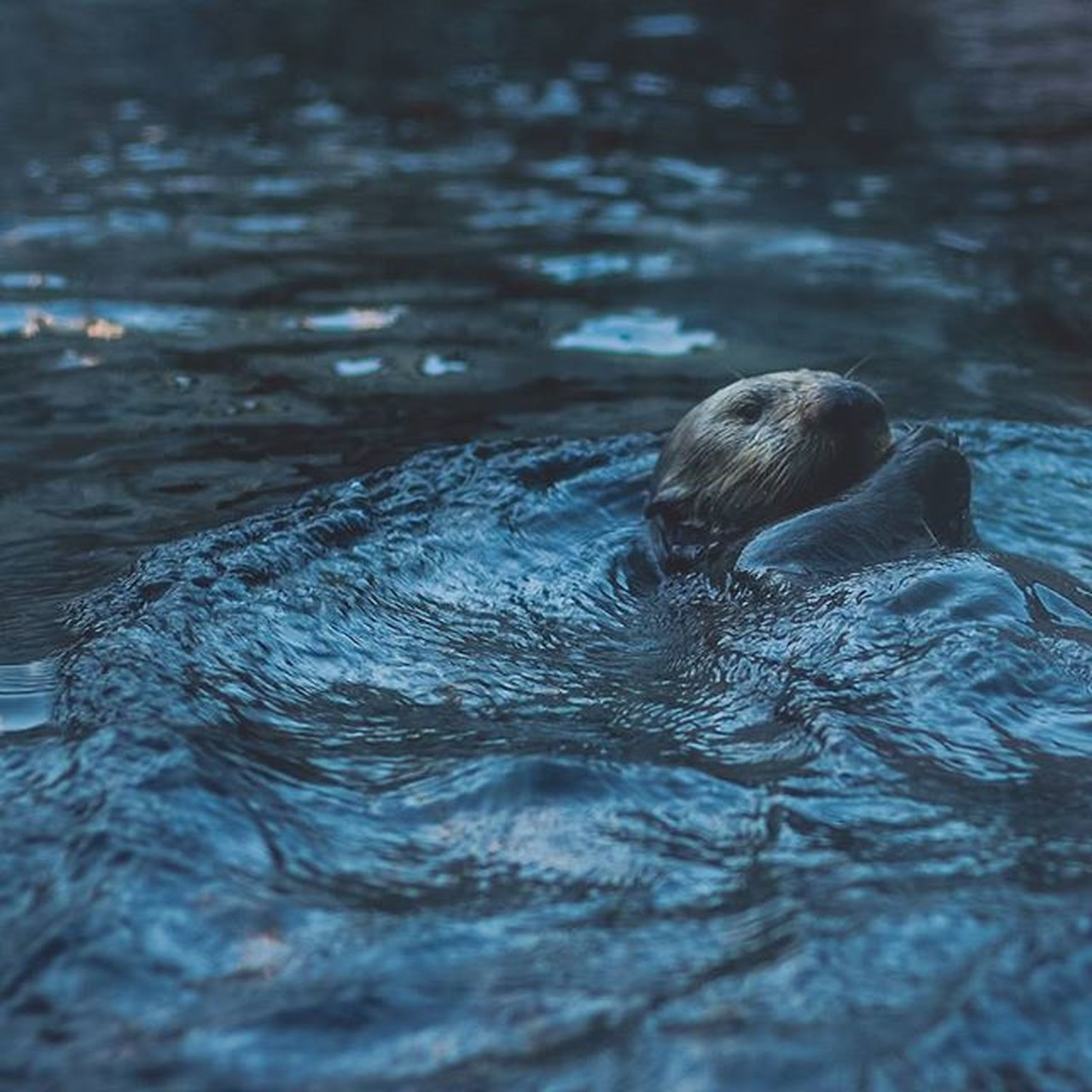 water, swimming, real people, waterfront, one person, lifestyles, day, outdoors, swimming pool, rear view, childhood, leisure activity, headshot, boys, nature, mammal, people