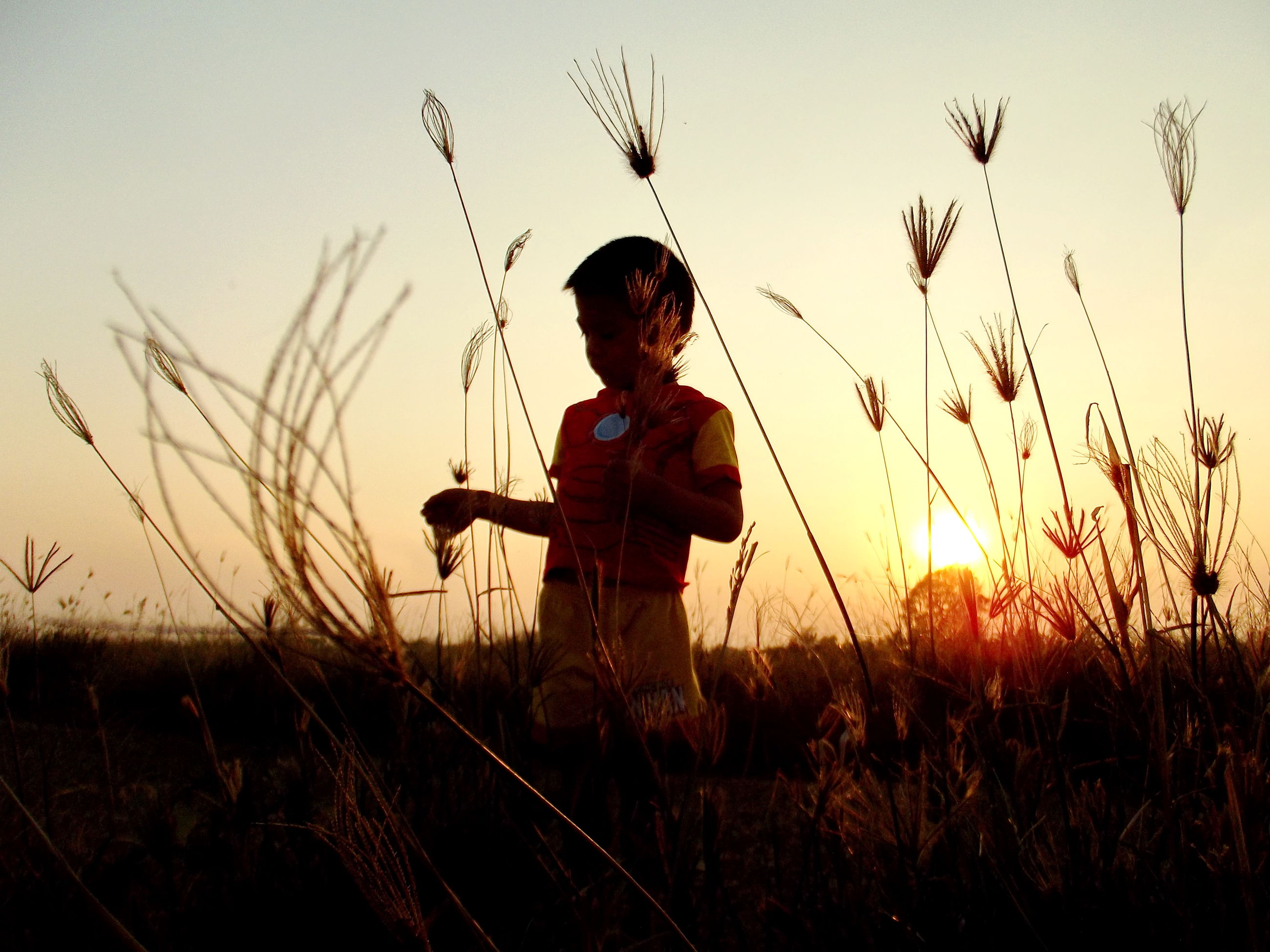 grass, lifestyles, leisure activity, sun, sunset, sunlight, sunbeam, field, plant, lens flare, growth, outdoors, nature, person, casual clothing, sky, focus on foreground, non-urban scene, young adult, beauty in nature, moody sky, scenics, vacations, hobbies