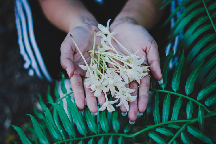 Flower Flower Photography Flowering Plant Flowerlovers Human Hand Child Tree Holding Social Issues Close-up Plant Cannabis Plant Needle - Plant Part Pine Tree Pine Cone Pine Woodland Blooming