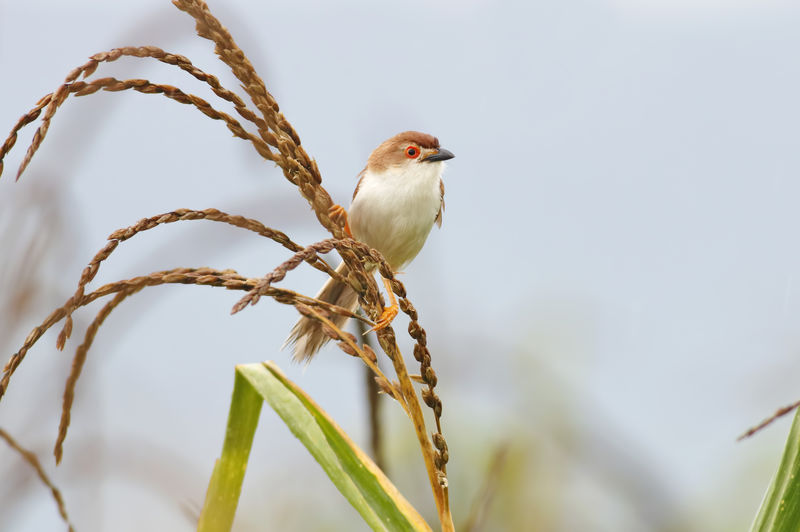 Animal Themes Animal One Animal Bird Animals In The Wild Animal Wildlife Plant Vertebrate Perching Focus On Foreground No People Close-up Nature Day Outdoors Sky Beauty In Nature Selective Focus Branch Copy Space