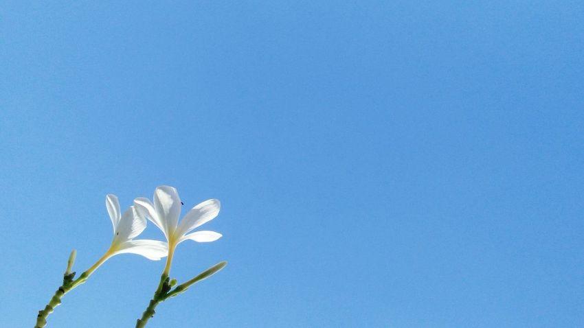 || Nature Theories || Delhi, India. TheFoneFanatic Macro Nature PhonePhotography Mobilephotography Lenovovibeshot Delhi India Flower Head Flower Blue Springtime Petal Summer Leaf Close-up In Bloom
