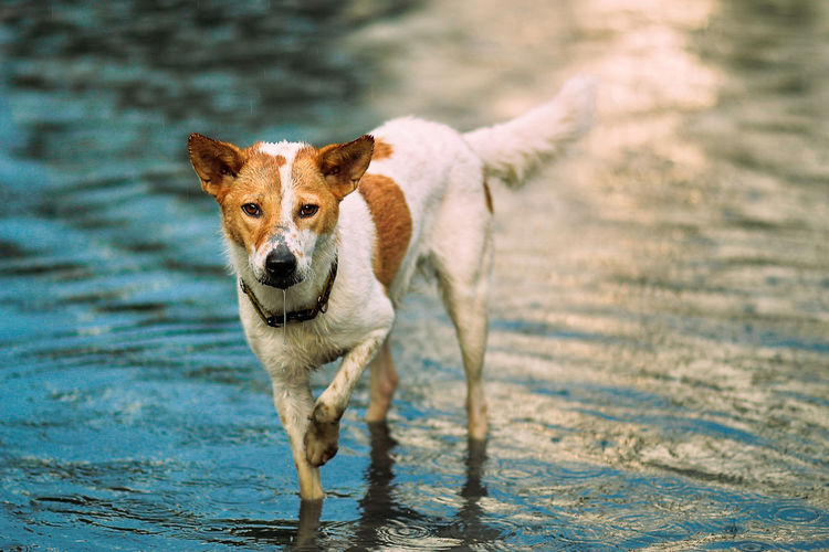 Portrait of dog standing in water
