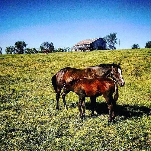 Lunch time on RamseyFarm Farm Thoroghbredracing Momma Selfie Thoroughbred Farms Horsefarm Sefies