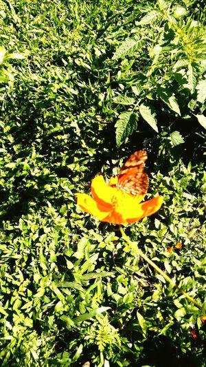 """BorboletaÉFlor Baterfly Flor Bomdia ... ;) """"Nao corra atras das borboletas, plante uma flor , e elas viram ate voce <3 Moment Inspired Reallife"""
