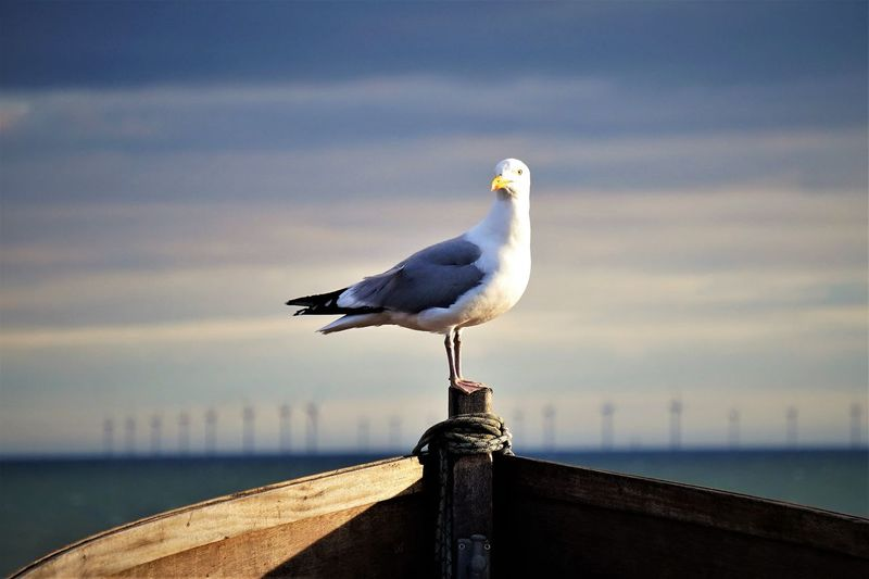 Seagull perching on shore against sea