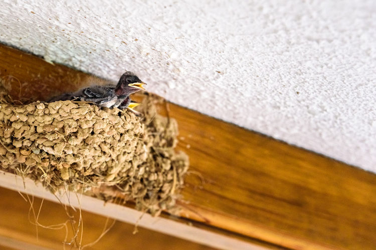 Close-up of bird perching on wood against wall