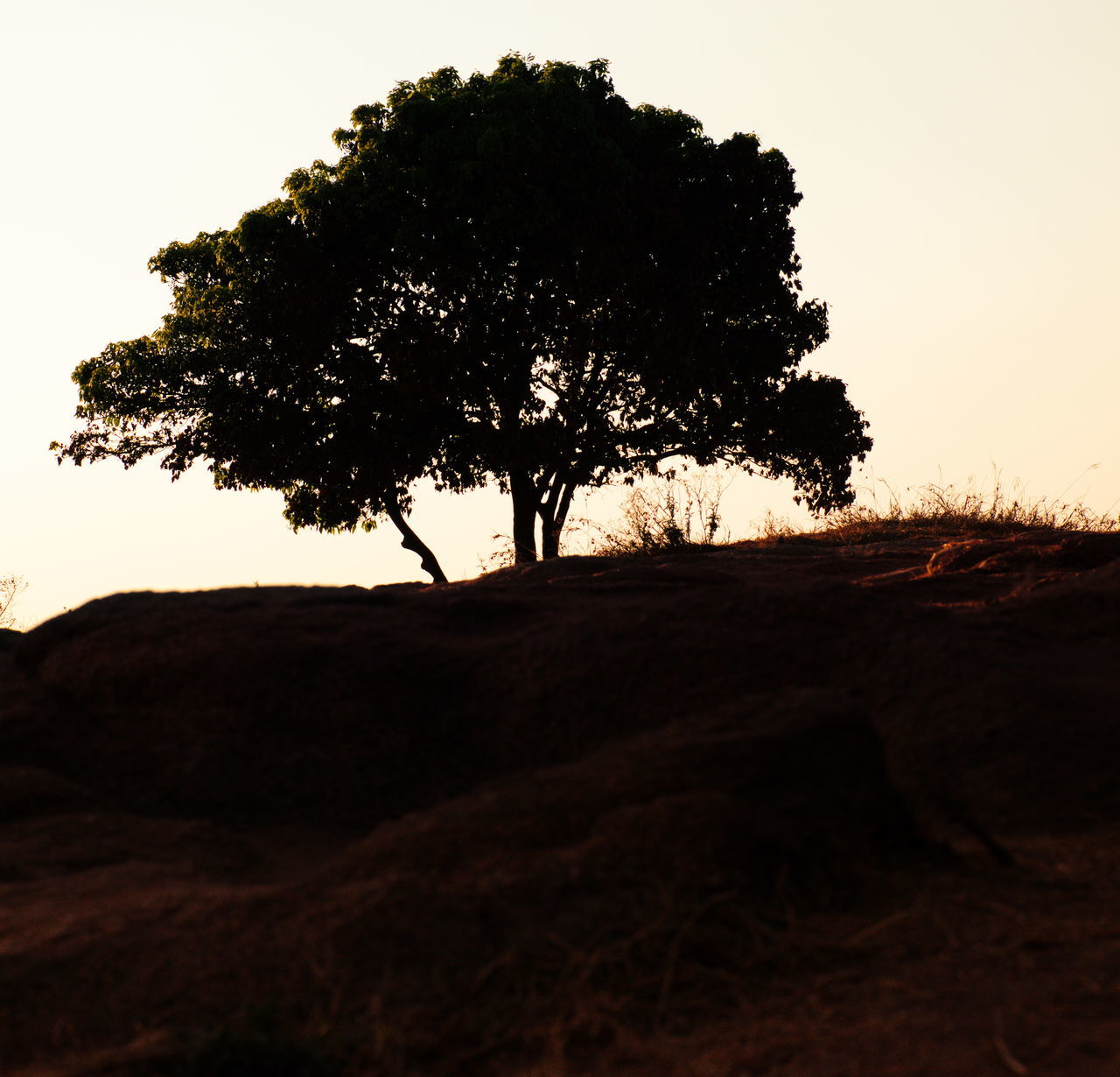 tree, landscape, silhouette, nature, beauty in nature, tranquil scene, scenics, sunset, tranquility, lone, sky, outdoors, no people, growth, clear sky, grass, day