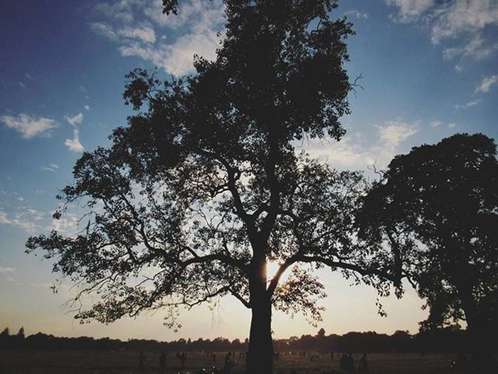 || Gentle Woods || . . Trees Woods Gentle Mytimelessmoments India_gram Danielwellington Ig_calcutta Kolkata_igers Kolkatainstagrammers Victoria Maidan MaidanDiaries _cic _soi Dawn Goldenhour Instagram Instafilter Webstaclick Webstagram Kolkata Calcutta Onlyinbengal Sokolkata Calcuttacacophony
