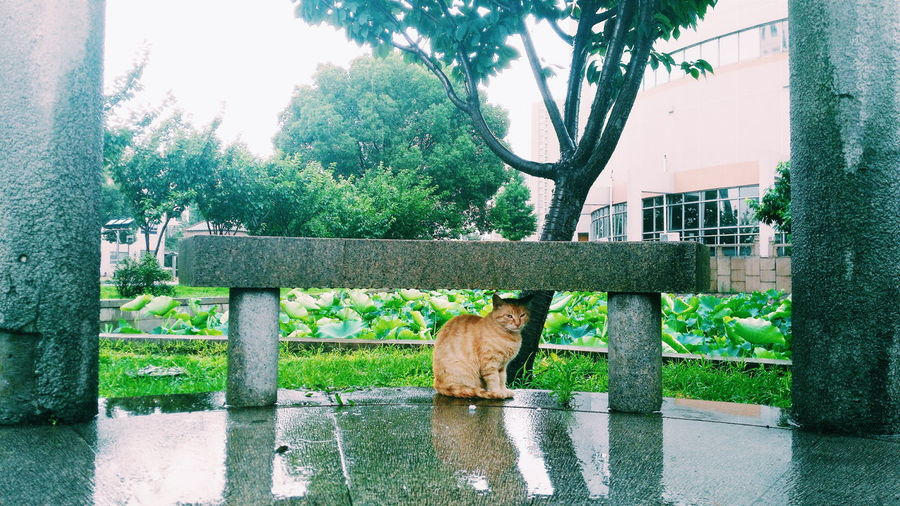 Cat sitting under stone bench against trees