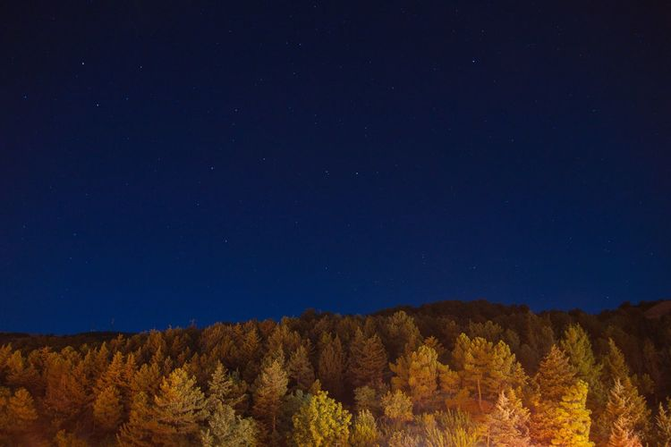 Parco dei Nebrodi Entroterra Siciliano Cesarò-nebrodi Copy Space Tranquil Scene Scenics Beauty In Nature Tranquility Nature Growth Outdoors Blue Mountain Non-urban Scene No People Multi Colored Majestic Tourism Star Field High Section Gianni Lo Turco Long Exposure Night Wood Star Stars The Great Outdoors - 2017 EyeEm Awards