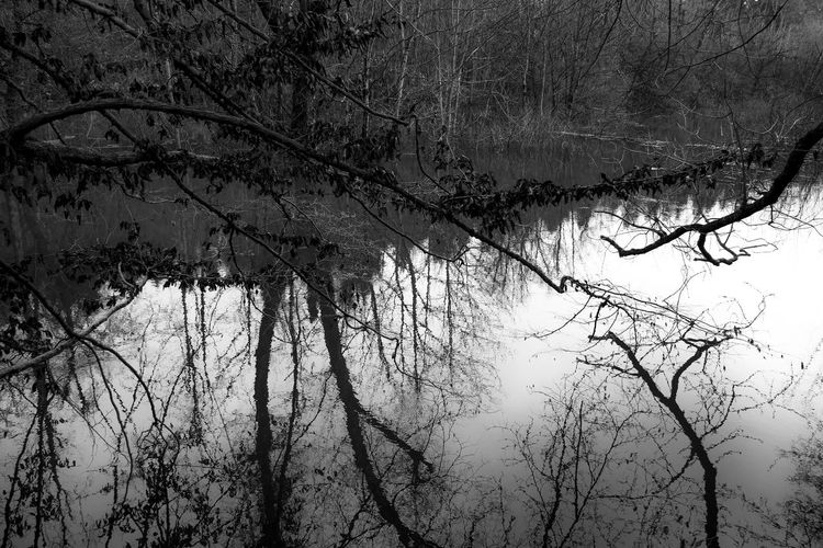 Reflection Slovenia Art Bare Tree Beauty In Nature Branch Cold Temperature Day Forest Nature No People Outdoors Scenics Tranquil Scene Tranquility Tree Water Winter Škocjan