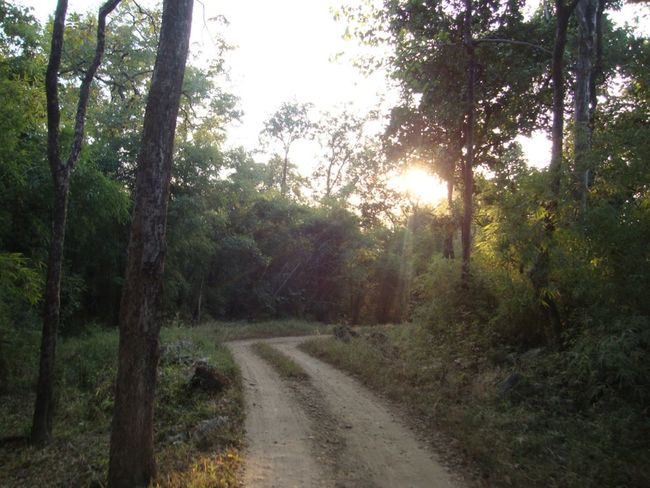 Beauty In Nature Forest Landscape Nature Road Sunlight Tree