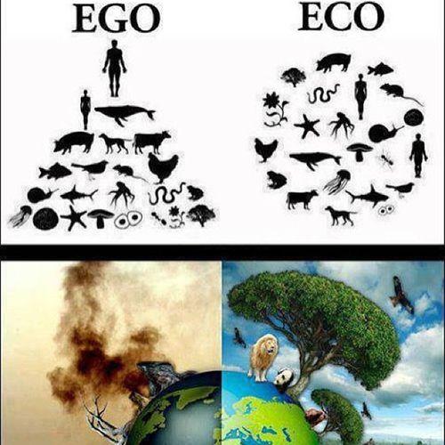 Creo en la integración armónica del paisaje y la gente produciendo comida, energía, entre otros de una matera sostenible. Es tan utópico? Consciencia Permacultura MovimientoVerde Vida naturaleza SinCarne